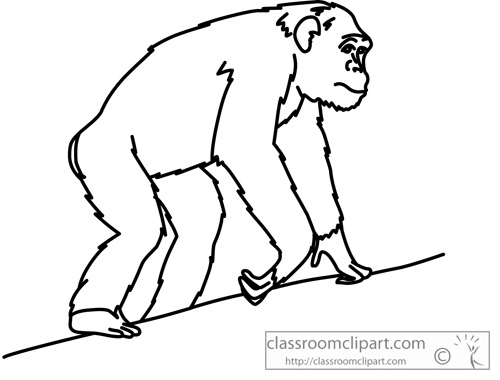 chimpanzee_anatomy_outline_clipart.jpg