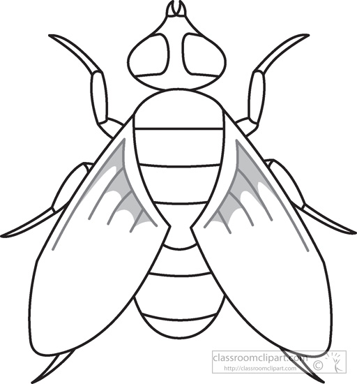 fly-insects-black-white-outline-clipart-972.jpg