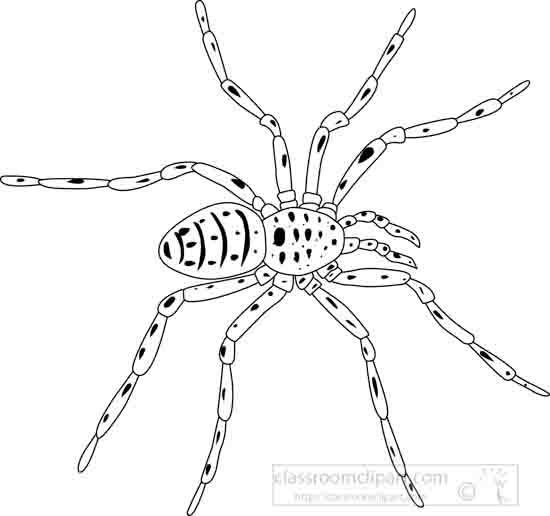 garden_spider_outline_04_22912.jpg