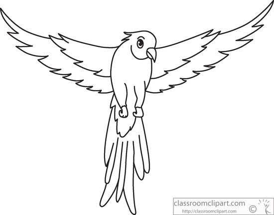 green-parrot-open-wings-black-white-outline-clipart-914.jpg