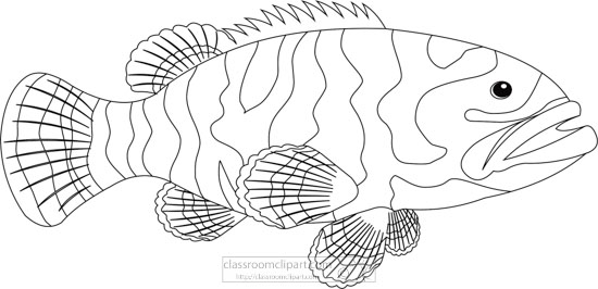 grouper-marine-life-black-white-outline-clipart.jpg