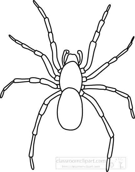 Animals : house_spider_outline_03_22912 : Classroom Clipart