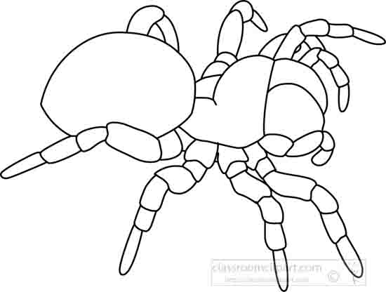 jumping_spider_outline_05_22912.jpg
