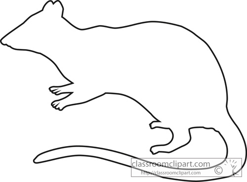 marsupial spotted tailed native cat outline.jpg