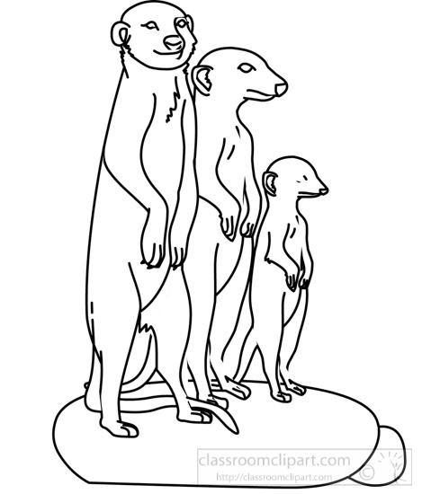 meerkat_group_312_05A_outline.jpg