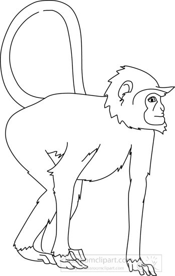 monkey_curly_tail_04A_outline.jpg