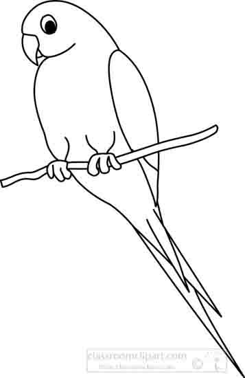 parrot_1_outline_22212.jpg
