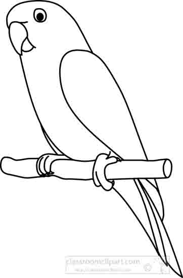 Parrot drawing outline - photo#8