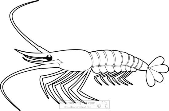shrimp-marine-animal-black-white-outline-clipart-818.jpg