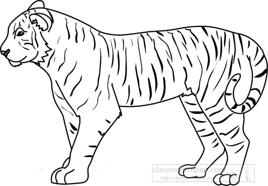 Y Tiger Is Our National Animal Animals : tiger_312_01...