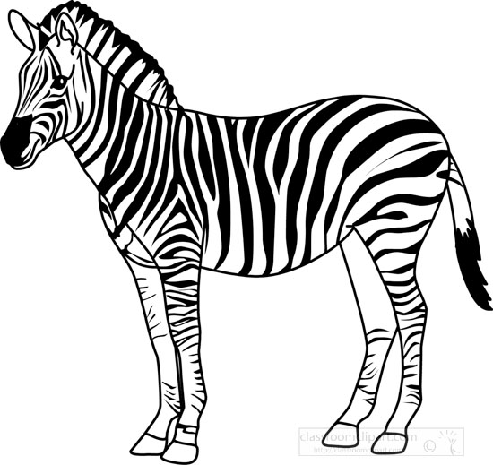 zebra outline drawing - photo #7