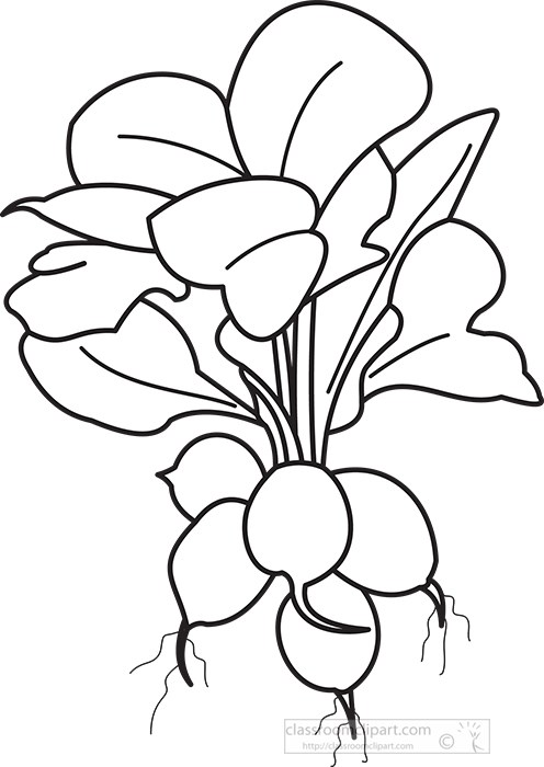 raddish-plant-black-outline-clipart.jpg