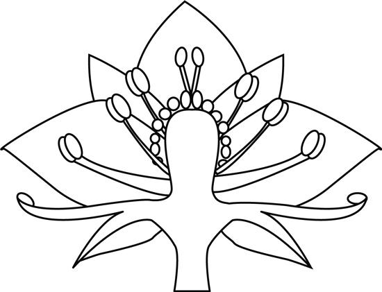 flower_staments_pistal_outlilne.jpg