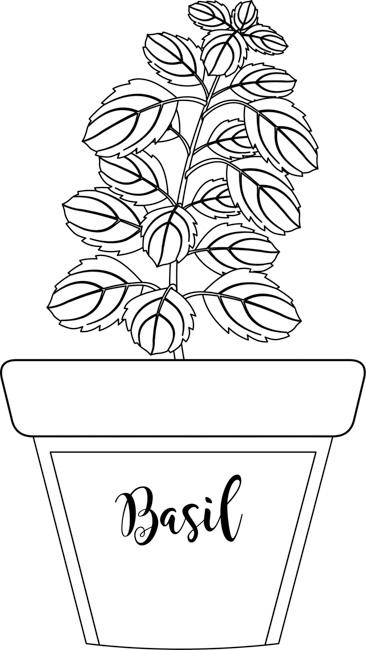 herb-basil-in-labeled-planter-black-white-outline-clipart.jpg