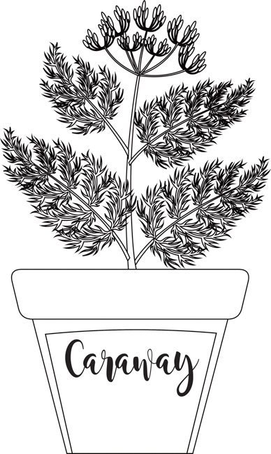 herb-caraway-in-labeled-planter-black-white-outline-clipart.jpg