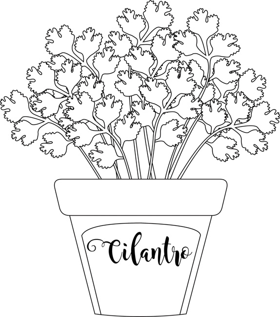 herb-cilantro-in-labeled-pot-black-white-outline-clipart.jpg