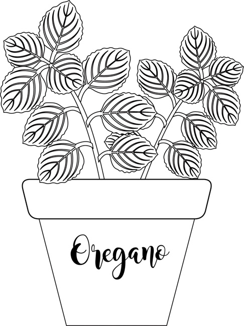 herb-oregano-labeled-planter-black-white-outline-clipart.jpg