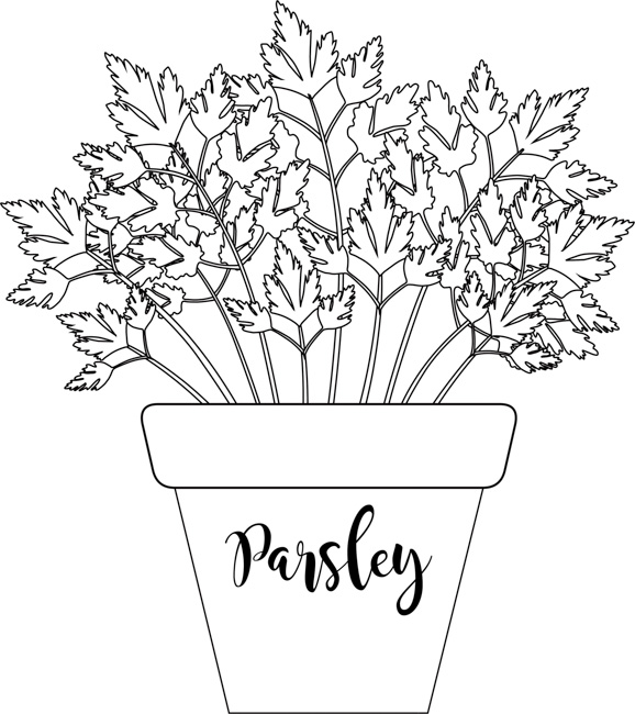 herb-parsley-labeled-in-planter-black-white-outline-clipart.jpg