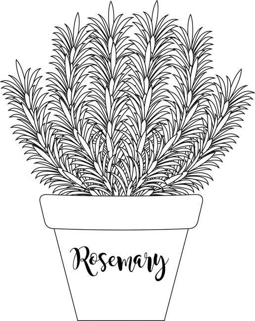 herb-rosemary-in-labeled-planter-black-white-outline-clipart.jpg