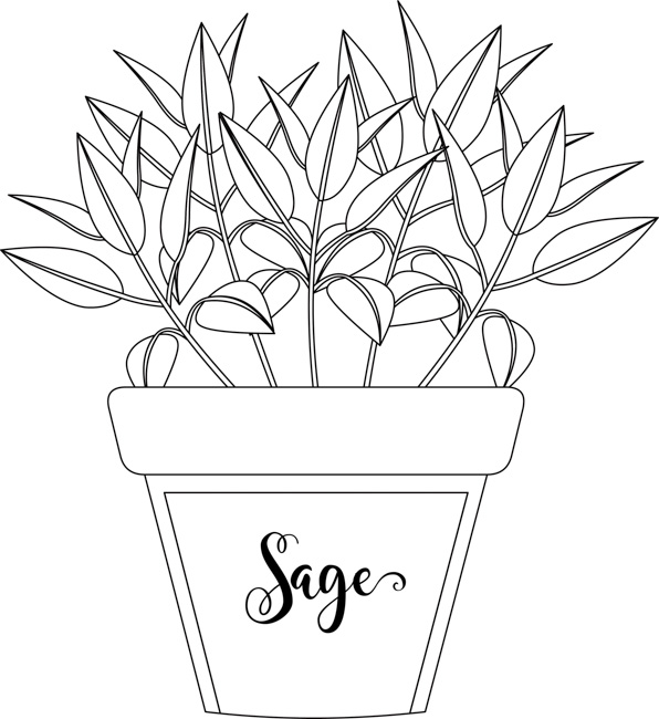 herb-sage-growing-in-planter-black-white-outline-clipart.jpg