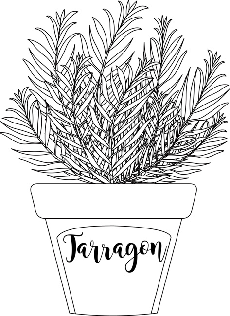 herb-tarragon-labeled-in-planter-black-white-outline.jpg