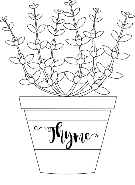 herb-thyme-in-labeled-planter-black-white-outline-clipart.jpg