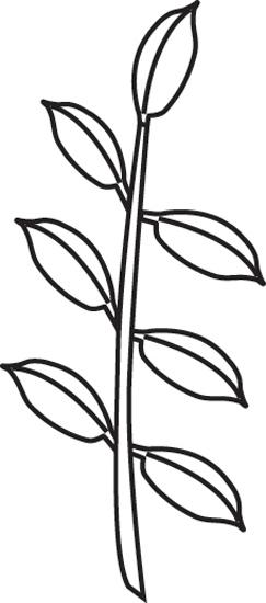 leaf-composition-odd-pinnate-outline.jpg