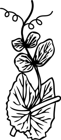 leaf_tendril.jpg