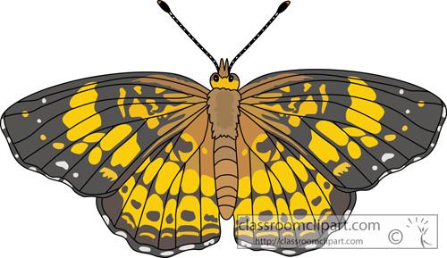 butterflies _pearl_crescent_butterfly_726.jpg