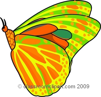 butterfly_609_8.jpg
