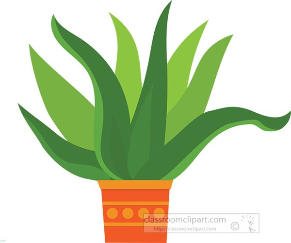 large-potted-succulent-green-cactus.jpg