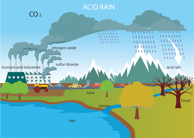 an analysis of the causes of acid rain and its effects on the environment Engineers are always considering the possible effects of acid rain on the health of humans and the environment when they investigate damage to bodies of water, wildlife, forests and crops, and contamination of the drinking water supply.