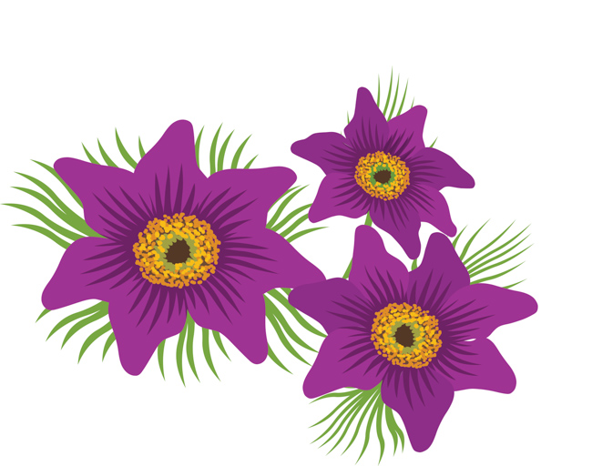 american-pasque-flowers-clipart-image.jpg
