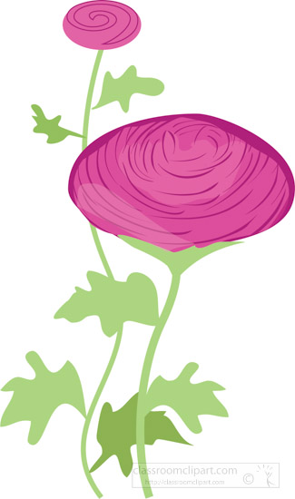 assorted-colorful-ranunculus-flower-clipart-7.jpg