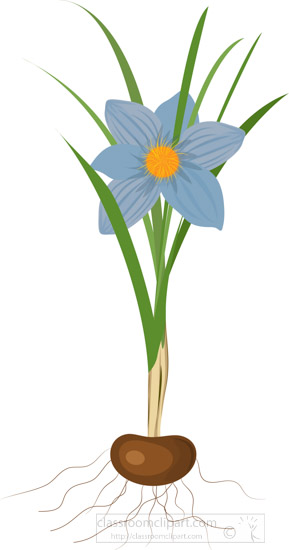 blue-flower-growing-from-bulb-clipart.jpg