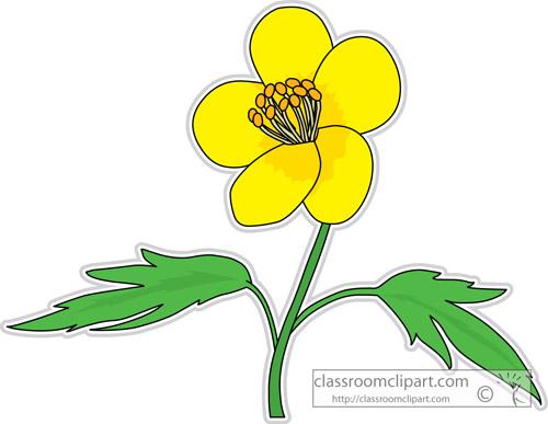 buttercup_flower_clipart-313.jpg