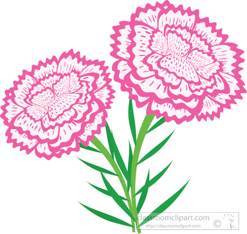 carnation-flowers-with-stems-clipart.jpg