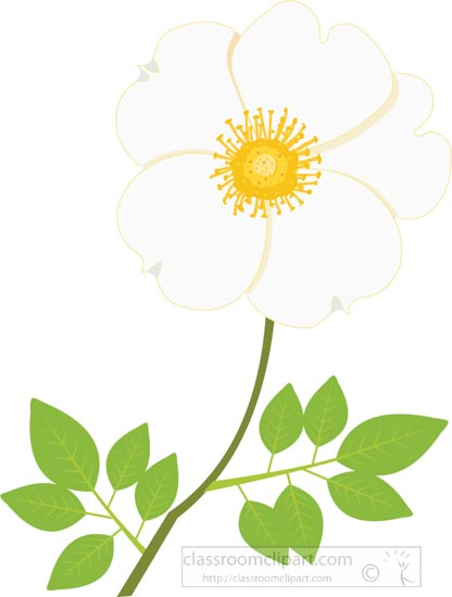 cherokee-rose-flower-with-stem-and-leaves-clipart-image.jpg