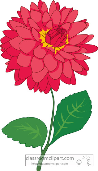 dahlias_flower_227A.jpg