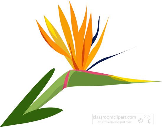 exotic-orange-blue-bird-paradise-flower-clipart.jpg