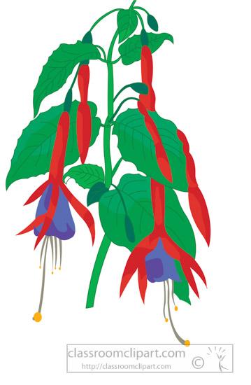 fushia-hanging-flowers-clipart-34935.jpg