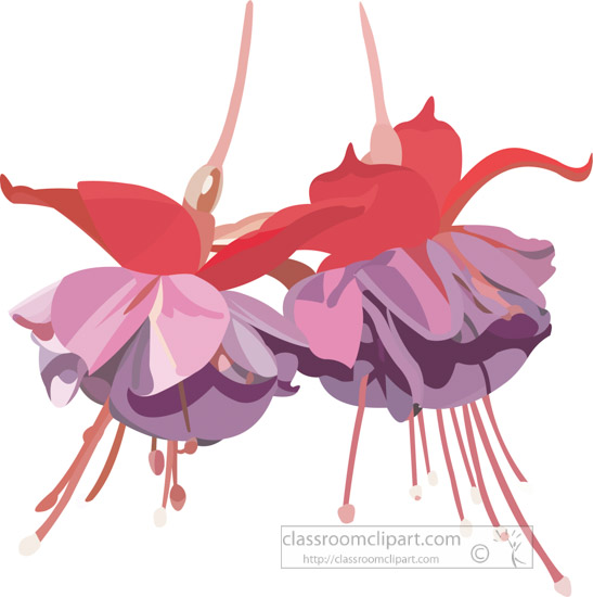 hanging-pink-and-purple-fuschia-flower-vector-clipart-image.jpg