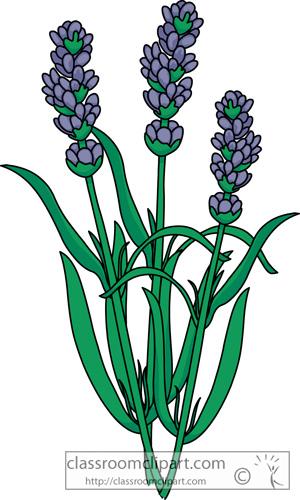 lavender_flower_23.jpg