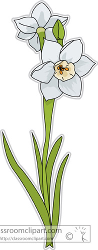 narcissus_flower_clipart-307.jpg