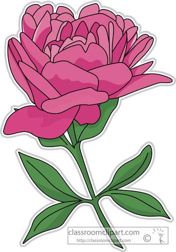peony_flower_clipart-313.jpg