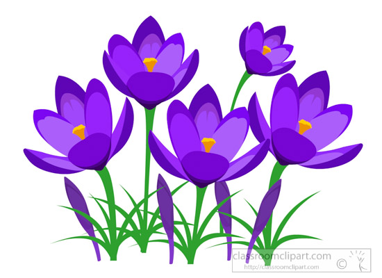 Flowers clipart perennial purple crocus spring flower clipart perennial purple crocus spring flower clipartg mightylinksfo