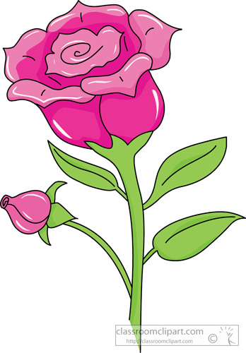 single_pink_rose_04.jpg