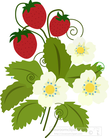 strawberry-plant-with-red-strawberries-clipart.jpg
