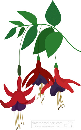 three-fuchia-flowers-hanging-from-branch-clipart.jpg