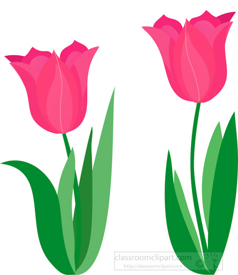 two-dark-pink-tulips-clipart.jpg